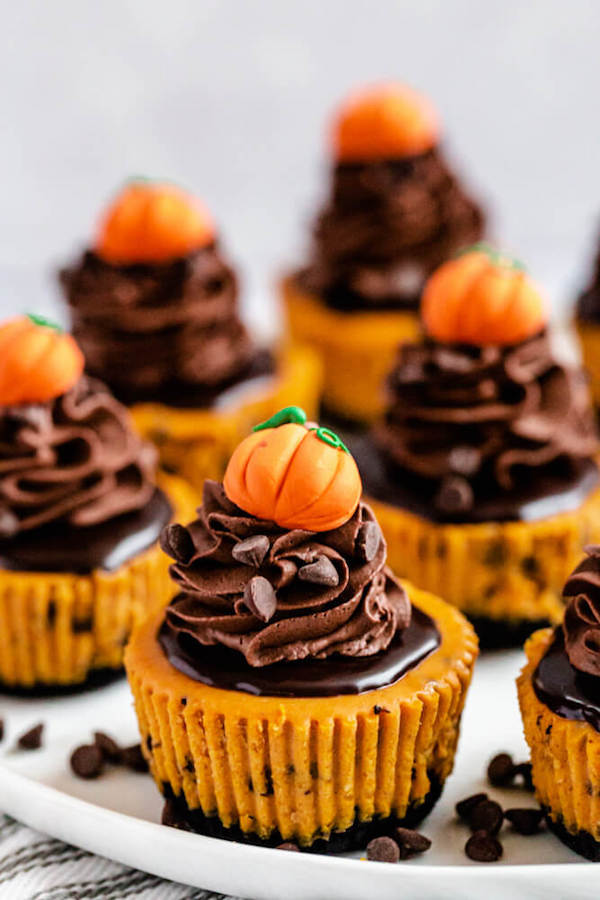 close up of mini pumpkin cheesecakes on a plate
